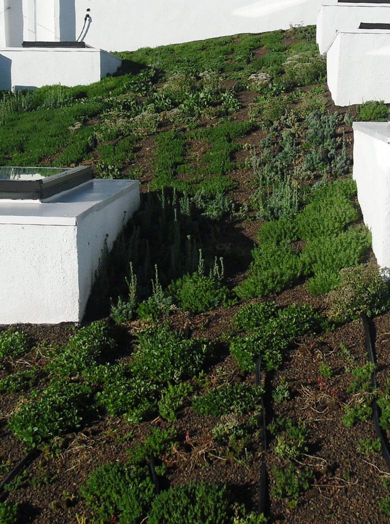 الحدائق العشبية السطحية