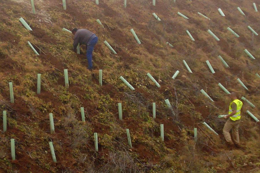 دبابيس التثبيت و أعواد وواقيات النباتات