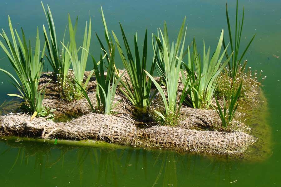 Colchones orgánicos flotantes