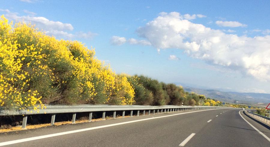 Jornada Carreteras y Vegetación
