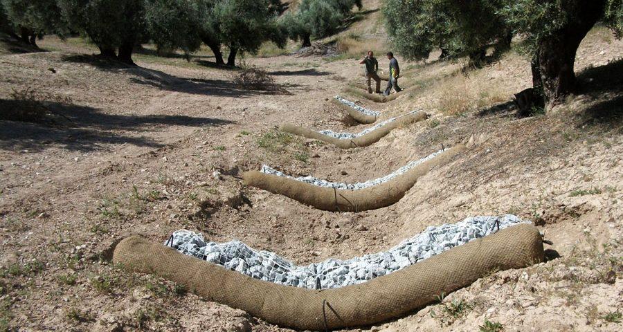 Productos para el control de la erosión en olivar