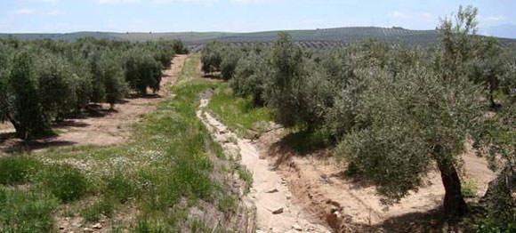 Modelo de desarrollo sostenible basado en el cuidado y conservación del suelo