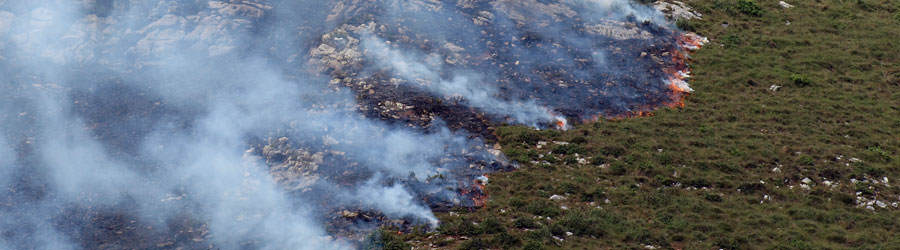 reforestacion-despues-incendio-forestal-1