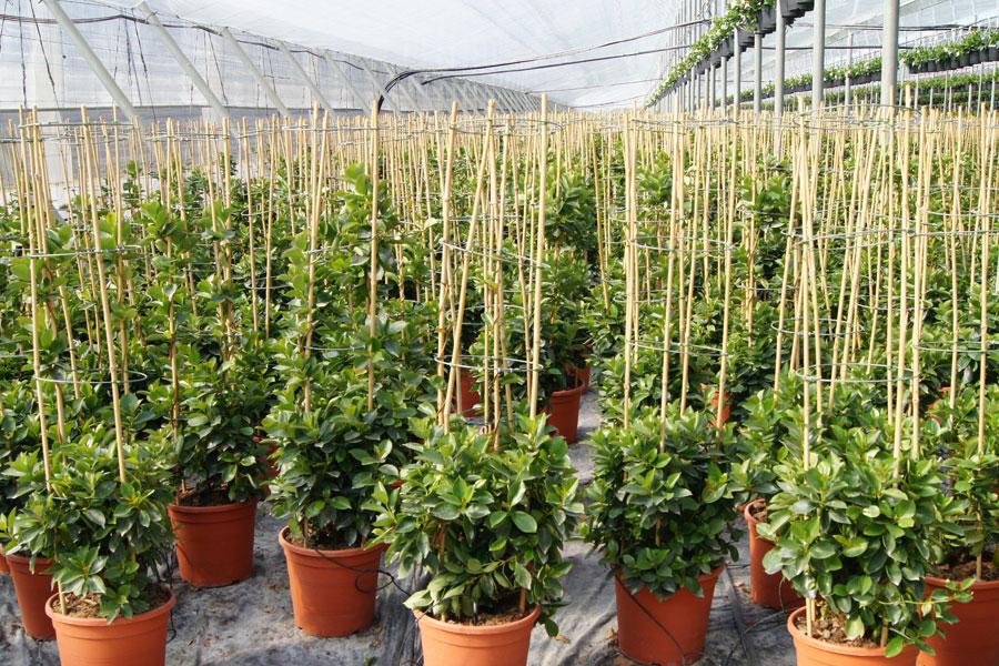 Grapas Tutores Y Protectores Para Plantas Bonterra