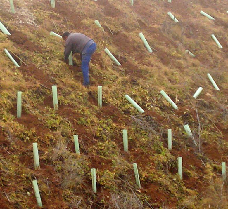 Tutores para plantas de restauración